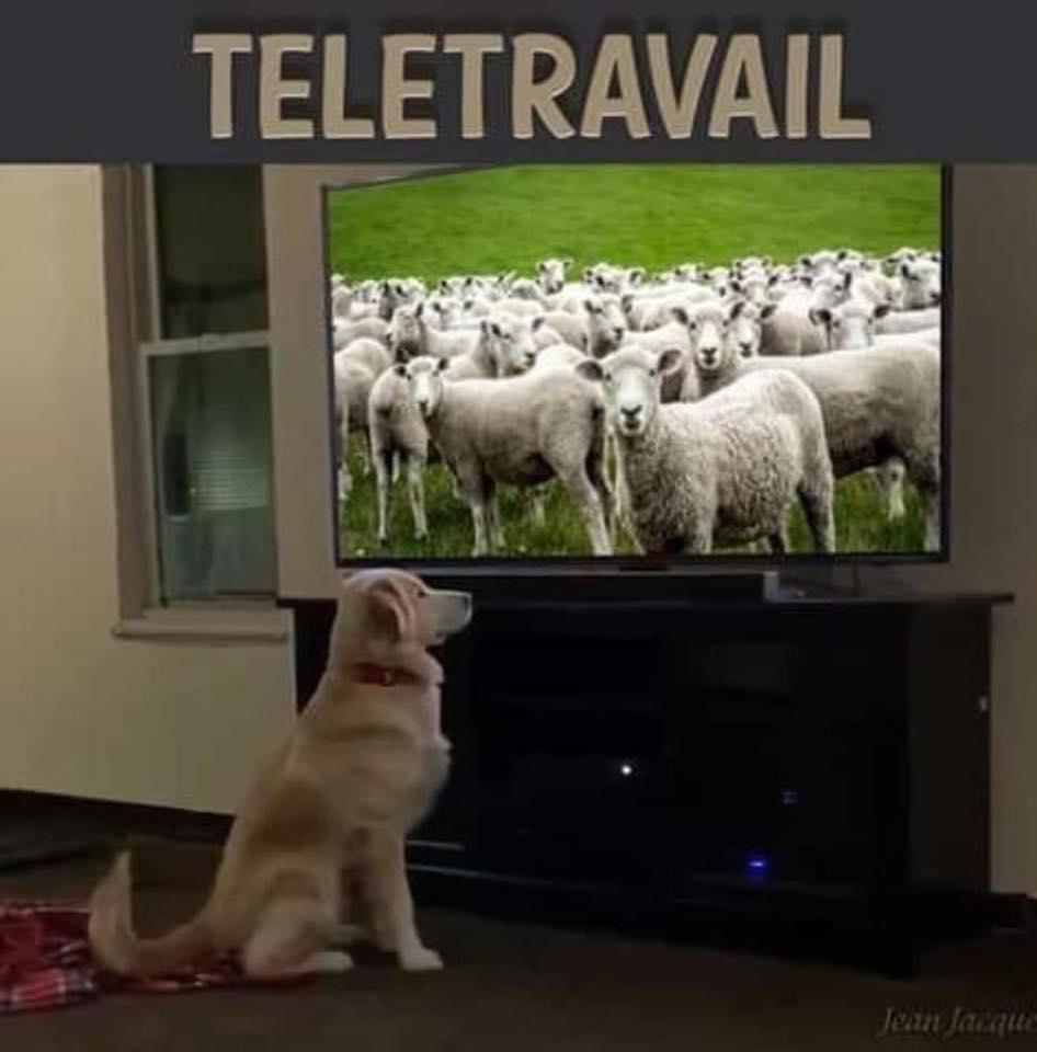 original telework